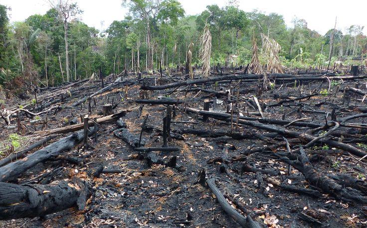 Déforestation en Amazonie : + 29 % en un an