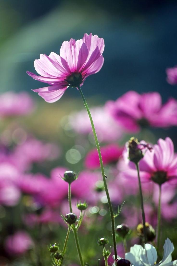 photowallXL purple beauty #fotobehang #bloemen