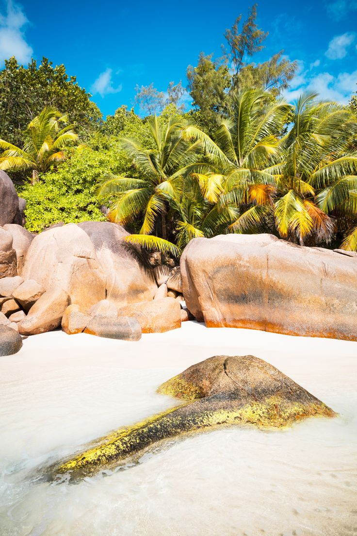 seychelles island, palm trees, rock