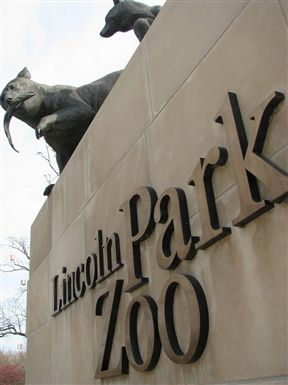 Quite a few sites to see here. Not far from the #loop in #chicago is the Lincoln Park Zoo. People come from all over to see the animals in the Windy City.