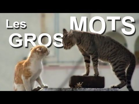 """Learn """"bad words"""" from two cats squaring off against each other! French commentary with English subtitles."""