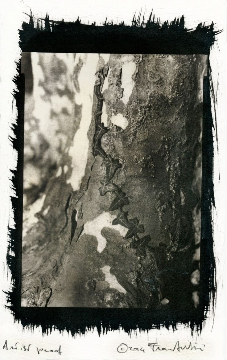 A palladium print I finished last night in my darkroom. Negative: 5x7 EFKE E.I. 50, developed with HC-110 (sol. B) To have an idea of what the process is (and what I went through...) check the blog...
