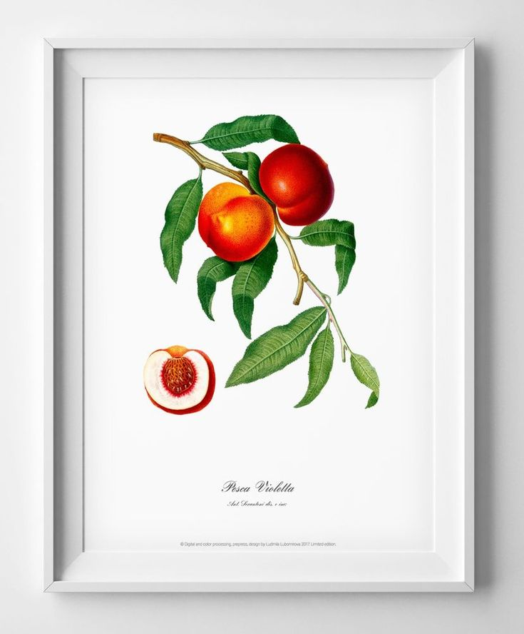Art print Peach poster Botanical watercolour vintage picture antique home decor #Vintage