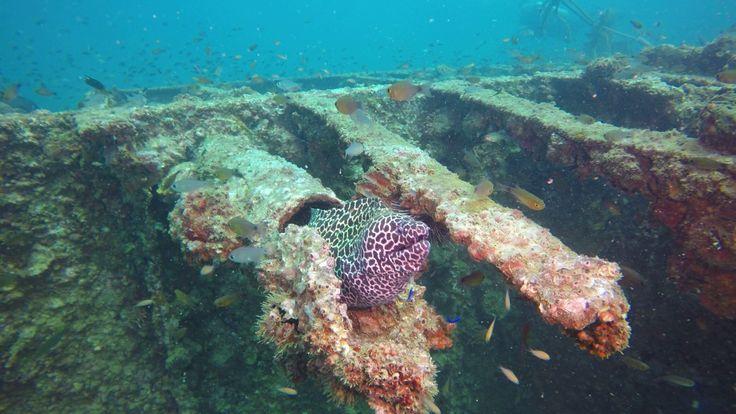 Khao Lak local diving : Boonsung wreck https://www.youtube.com/watch?v=lMp1SBMpRi8