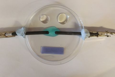 The observation area in this microscale experiment is just the blue copper chloride drop and the tips of the graphite electrodes. Potassium iodide and potassium bromide solutions, and the damp blue litmus paper provide qualitative tests for chlorine production