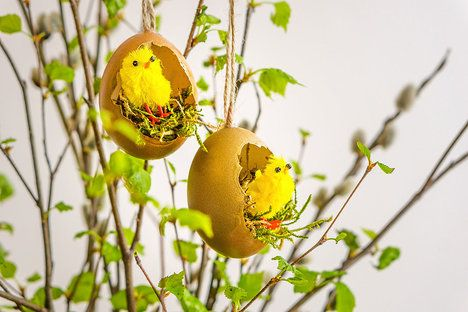 Zlatá hnízda poslouží jako milá ozdoba na větvičky břízy; Tomáš Rubín