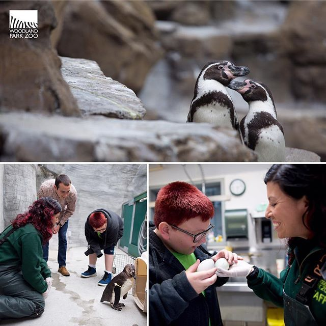 When it comes to adorable penguin chicks, we've got you covered. When it comes to education in science, tech, engineering and math, we know how to engage youth and inspire young minds. When it comes to Access for All, we need your help in making a zoo experience possible for every family in King County. For @bbbsps Big Brothers Big Sisters of Puget Sound participants like Luke and Giovanni, the zoo is a place to explore and get lost in laughter. We make this experience free through our…