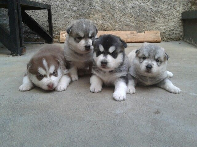 Luna's puppies