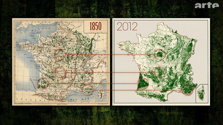 la forêt française entre 1850 et 2012   Foret francaise ...