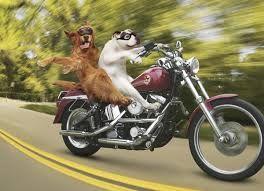 grappige honden - Google zoeken