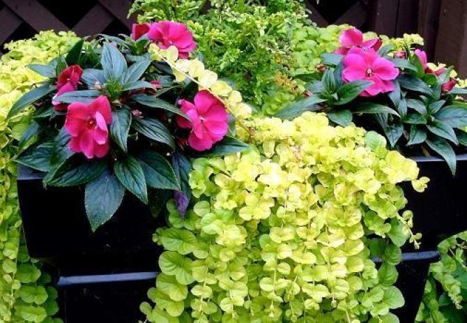 Niecierpek Floral Plants Floral Wreath
