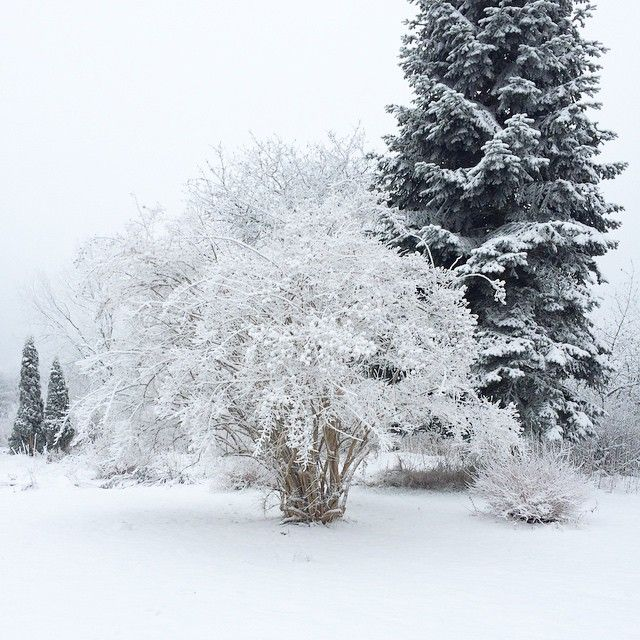#tbt till ett orört vinterlandskap på landet :evergreen_tree: #picStorming #sweden - by akraften