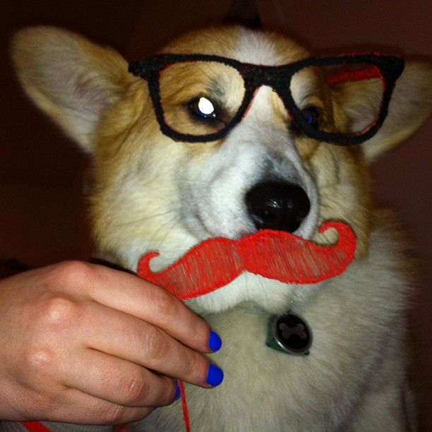 3Doodler hipster dog!! How much does a hipster weigh? An insta-gram! Haha #Fun #3Doodler #WhatWillYouCreate?