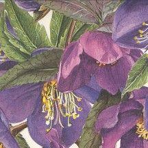 Large Purple Blossoms Floral Print Italian Paper ~ Tassotti