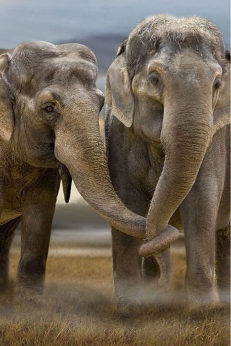Elephants love