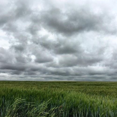 A cloudy day in the Henrys Fork area Idaho. #HenrysFork...