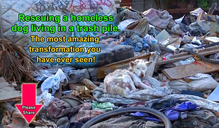 A homeless dog living in a trash pile gets rescued, and then does someth...