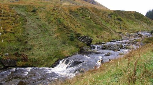 Flow gently, sweet Afton, among thy green braes, Flow gently, I'll sing thee a song in thy praise; My Mary's asleep by thy murmuring stream, Flow gently, sweet Afton, disturb not her dream. Thou stock-dove, whose echo resounds thro' the glen, Ye wild...