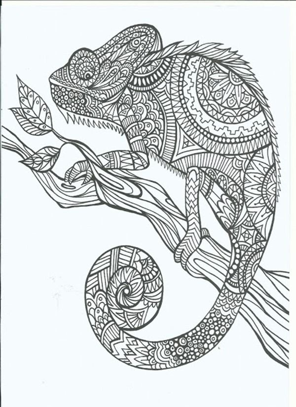 chameleon free printable coloring pages for adults 12 more designs