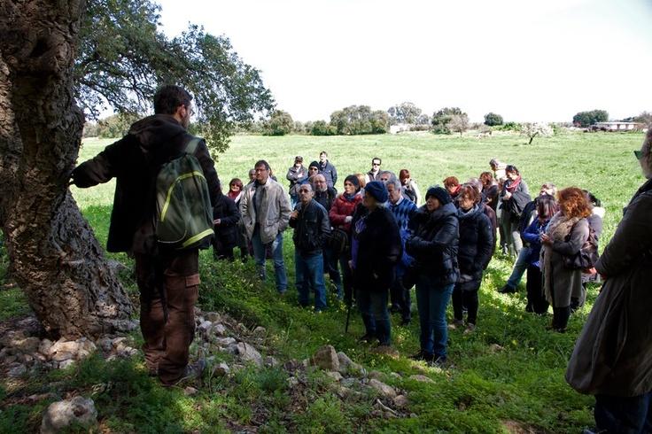 E così accade che durante una passeggiata in natura si incontrano querce da sughero secolari.    Per saperne di più su questo evento, visitate il nostro portale: http://www.pugliaevents.it/it/gli-eventi/ipogea-viaggio-nel-mondo-dei-frantoi-ipogei