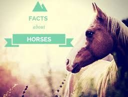 Image result for interesting horse facts