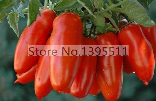 100/bag Tomato Seeds -San Marzano tomato, Heirloom Open Pollinated Tomato Seeds  vegetable seeds for home planting