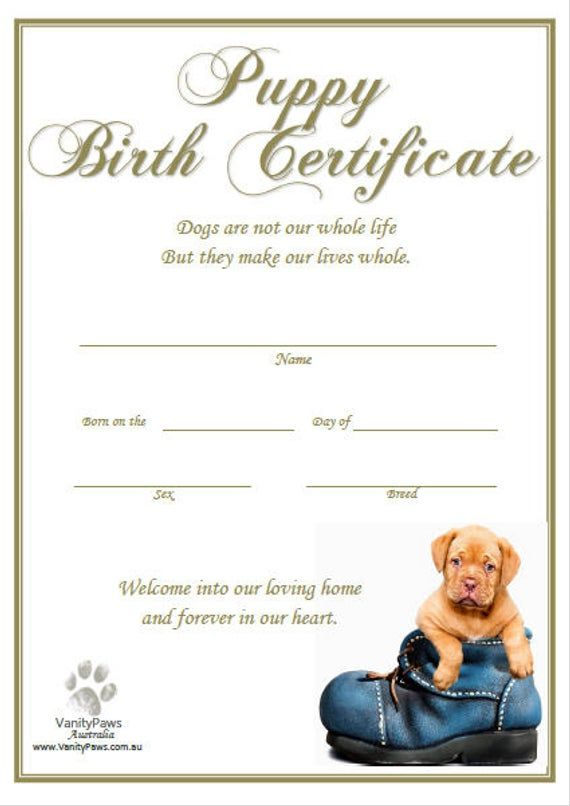 Puppy Birth Certificate Dog Birth Birth Certificate Template Birth Certificate