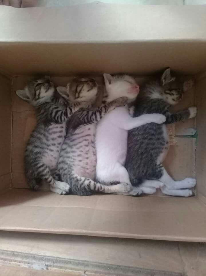 A família  que  dorme  unida  permanece  unida.