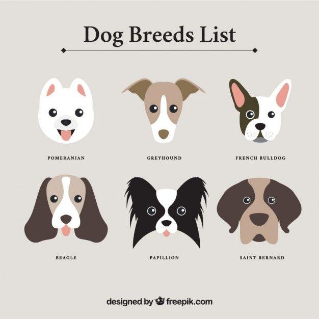 Lista de razas de perro Vector Gratis