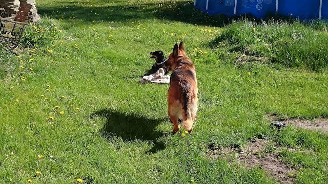 Mit hundeliv med Vaks.: En rigtig drillepind / A real teaser