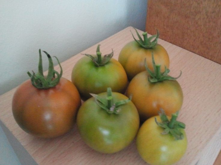 Tomatoes from my balcony