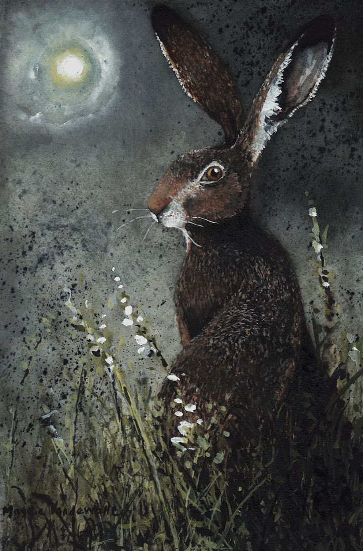 Moongazer - Maggie Vandewalle .. and so I ask again... do you ever see the rabbit in the moon?