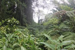 Tropical forests or rainforests are one of the oldest types of vegetation forests that still exist on the earth.
