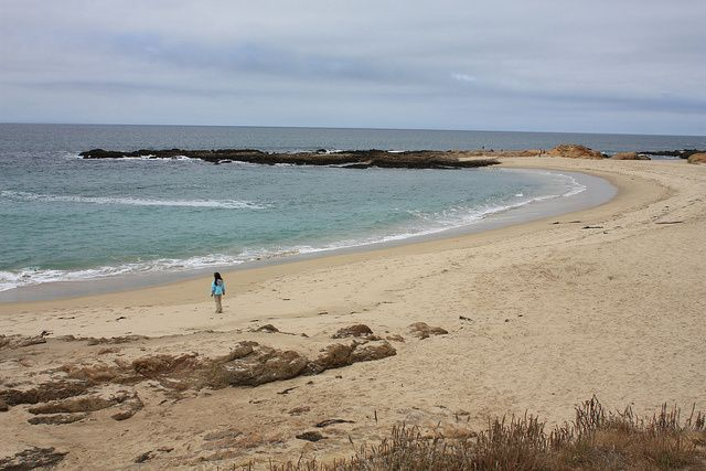 Dog Friendly Pescadero