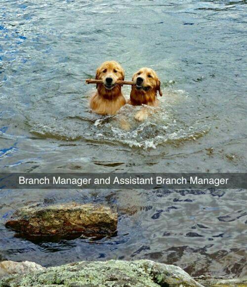 Corporate dogs