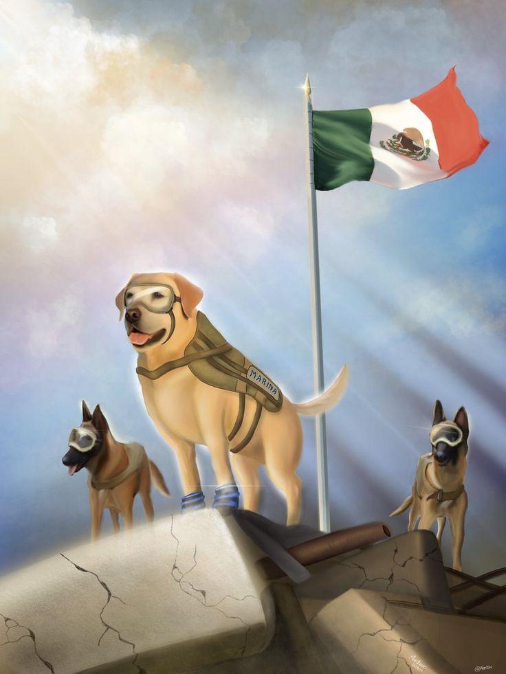 Frida...la perra rescatista que cautivó a México después del Terremoto 19.IX.2017
