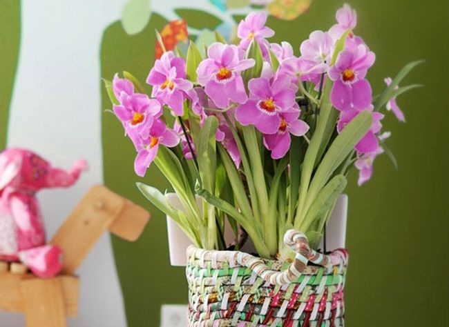 Comment Cultiver Les Orchidees D Interieur Orchidee Phalaenopsis Orchidee Comment Arroser Une Orchidee