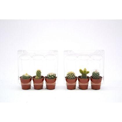 Cactus - Set of 3