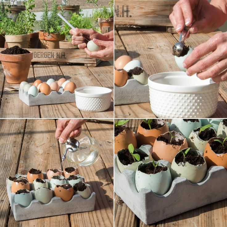 Learn how to grow your own seedlings using eggshells as planters! These few easy steps will help you get a jump start on your own home garden.