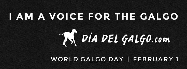 Help Save the Galgos!