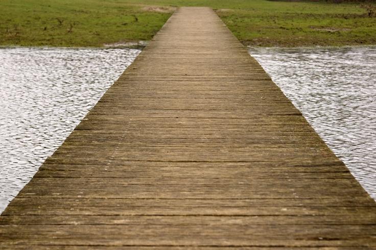 lijnen in het zelfde natuurgebied