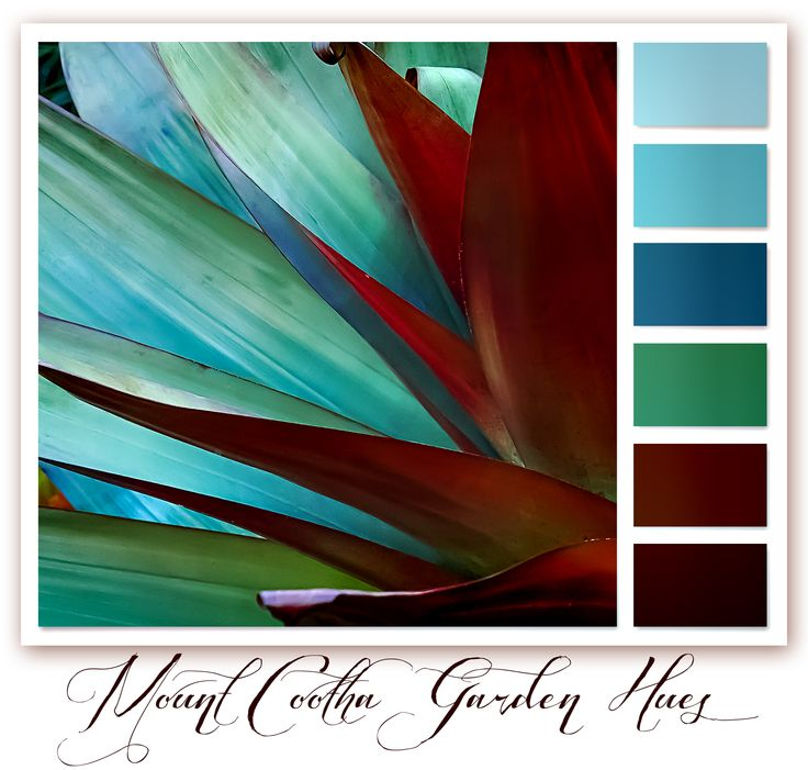 This colour palette is created from a madagascan plant at Mt Cootha Botanical Gardens, Brisbane Queensland - Australia