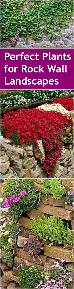 Rock wall landscaping, landscape with a rock wall, DIY landscaping, popular pin, outdoor landscaping, outdoor design, gardening hacks #home_garden_wall