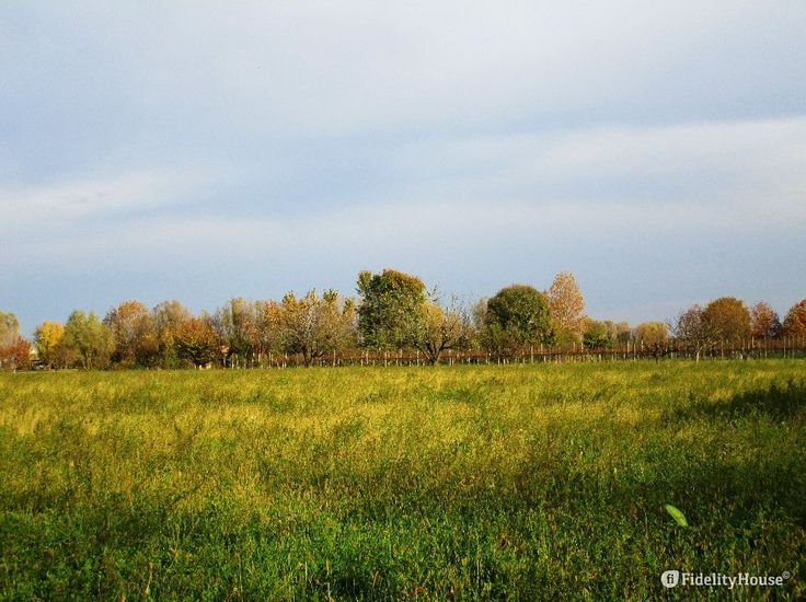Oltre il campo verde e giallognolo una fila viti e alberi da frutto sparsi qua e là. Siamo a Cavino in provincia di Padova.