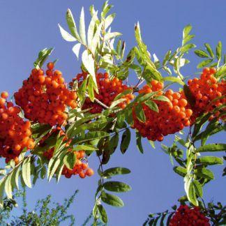 Jedovaté rastliny vbyte azáhrade