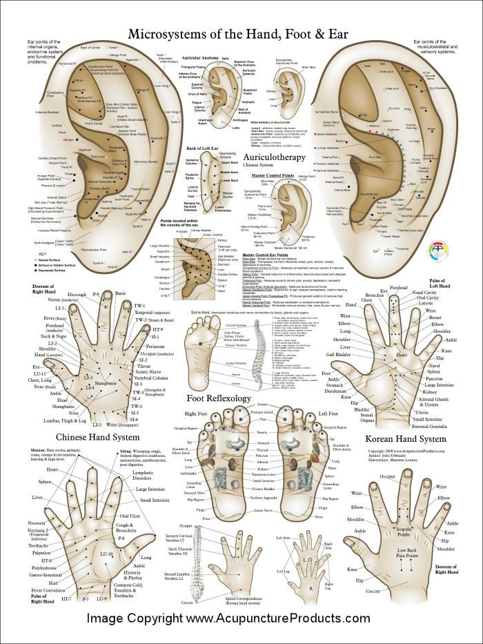 The 7 best Anatomy images on Pinterest | Physiology, Anatomy and Health