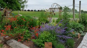 Moberly Cultural Herb Garden in Vancouver