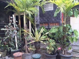 Kost Dijual Maguwoharjo Yogyakarta Dekat Kampus UNRIYO