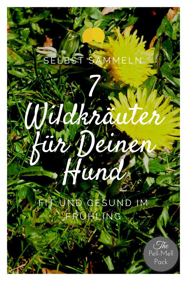 7 Wildkräuter direkt vor Deiner Haustür - Die gesunde Frühjahrskur für Deinen Hund | thepellmellpack.com