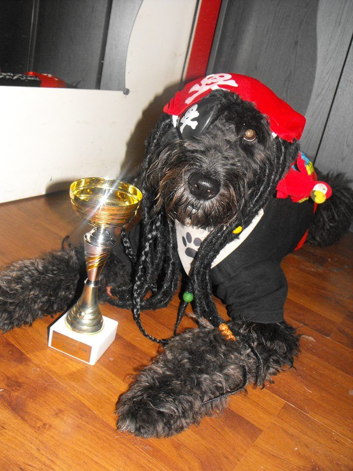 Diego is bol-dog lett :)